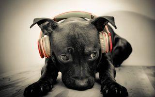 Обои на телефон наушники, собаки, забавные, другие, dog with headphones