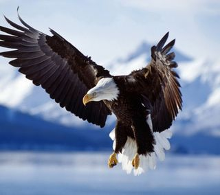 Обои на телефон полет, орел