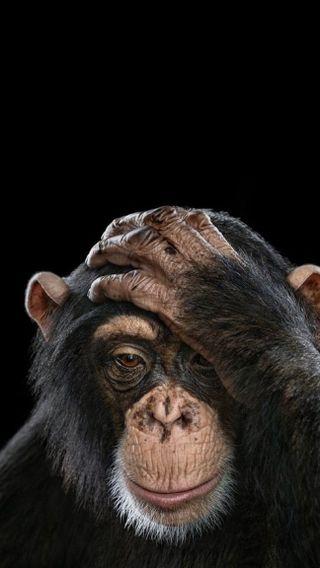 Обои на телефон обезьяны, животные