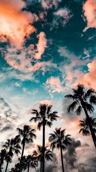 Обои на телефон пальмы, лето, деревья, дерево, пляж, красочные, вайб, summer vibes