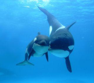 Обои на телефон море, мир, животные, дельфины, sea-world