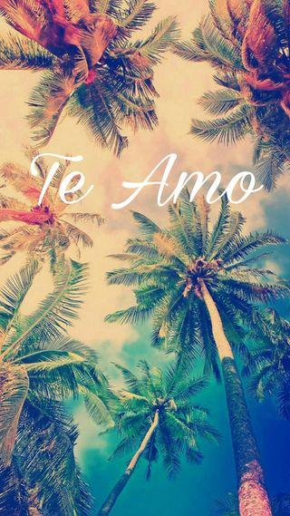 Обои на телефон пальмы, любовь, te amo, sentimental, love