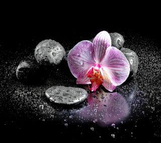 Обои на телефон спа, орхидея, дзен, капли, камни, вода