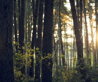 Обои на телефон солнечные, снаружи, свежие, природа, на улице, лес, весна, zedgespring, fresh forest