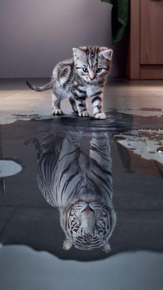 Обои на телефон тигр, кошки, котята