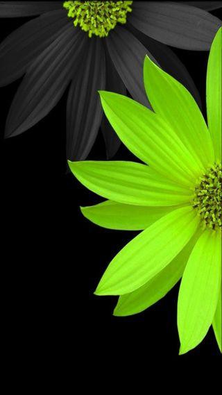 Обои на телефон цветы, весна