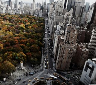 Обои на телефон парк, новый, машины, город, горизонт, skyline
