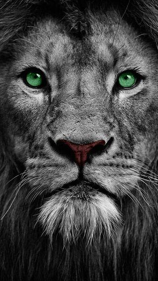 Обои на телефон green eyes, черные, белые, зеленые, животные, лев, король, лицо, глаза, дикие