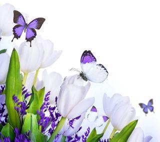 Обои на телефон тюльпаны, цветы, цветочные, весна, бабочки
