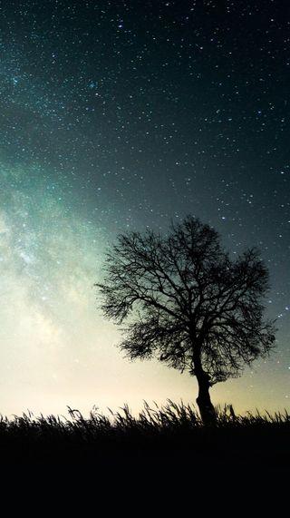 Обои на телефон путь, ты, природа, одиночество, ночь, никогда, небо, млечный, звезды, дерево, айфон, you are never alone, iphone