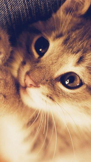 Обои на телефон оранжевые, кошки, котята, коты