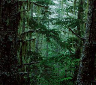 Обои на телефон туман, сумерки, темные, старые, лес, крутые, древний, moss