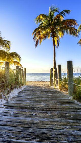 Обои на телефон пляж, природа, пальмы, the beach