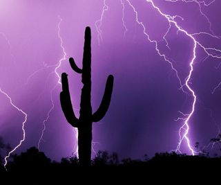 Обои на телефон гром, фиолетовые, силуэт, свет, ночь, кактус, дождь, lightening