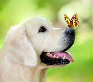 Обои на телефон собаки, бабочки