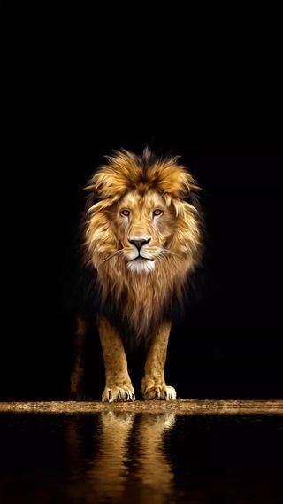Обои на телефон опасные, лео, лев, король, животные, fearless