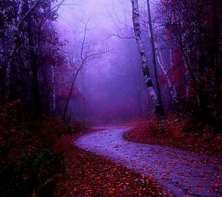 Обои на телефон прогулка, утро, туман, путь, лес, дорога, деревья, дерево, misty morning walk