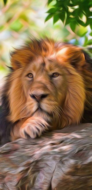 Обои на телефон монтаж, джунгли, мой, лицо, лев, король, величественные, my edit, land