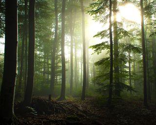 Обои на телефон германия, утро, туман, лес, деревья, germany forest