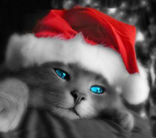 Обои на телефон глаза, счастливые, синие, рождество, новый, кошки, pisika cavsin, christmas cat