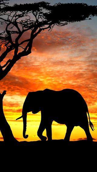 Обои на телефон слон, тень, пейзаж, облака, закат, дерево, восход