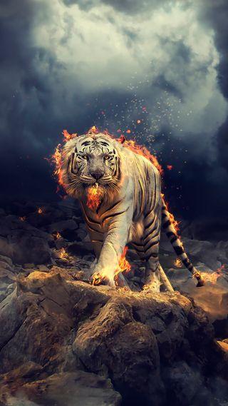 Обои на телефон человек, тигры, тигр, обнимать, мир, лев, крутые, дизайн, белые, cry