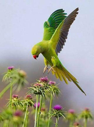 Обои на телефон попугай, счастливые, птицы, happy