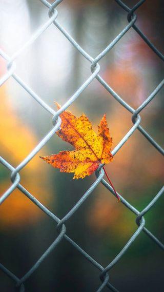 Обои на телефон упавший, макро, природа, осень, листья, боке, mesh
