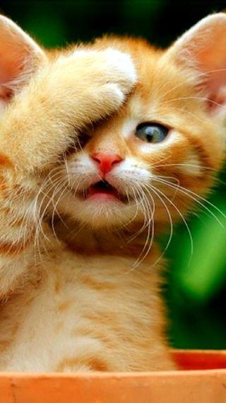 Обои на телефон коты, милые, кошки, забавные
