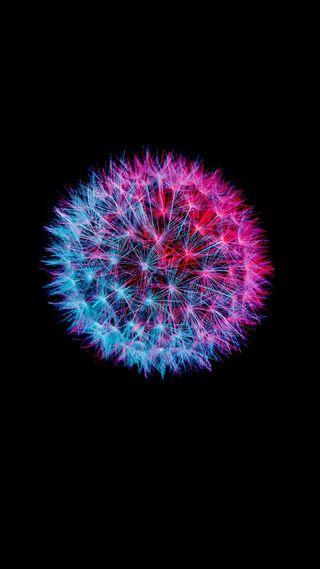 Обои на телефон мечта, цветы, фейерверк, розовые, коты, дизайн, галактика, galaxy, flowers 4k