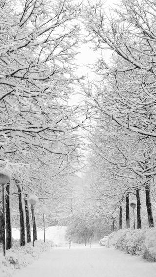 Обои на телефон рождество, зима, снег, дерево, лес, холод, страна чудес