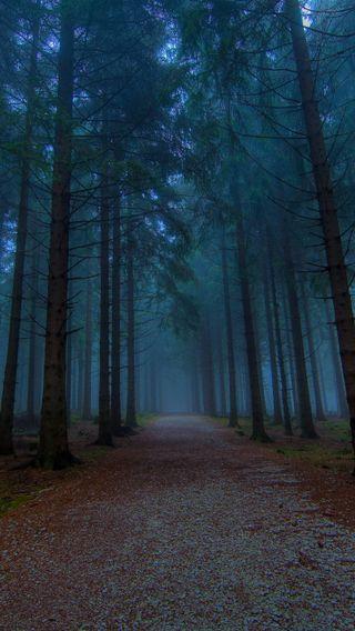 Обои на телефон туман, путь, лес, деревья