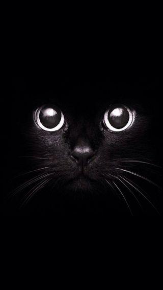 Обои на телефон пантера, черные, кошки, кот, bolivia