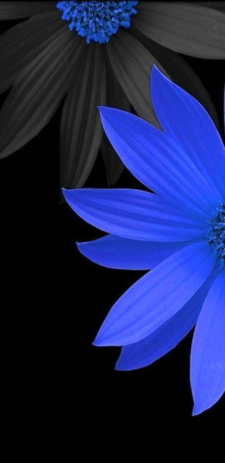 Обои на телефон сад, цветы, синие, симпатичные, природа, blue flowers