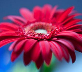 Обои на телефон лепестки, цветы, природа, прекрасные, красые, hd, 4k