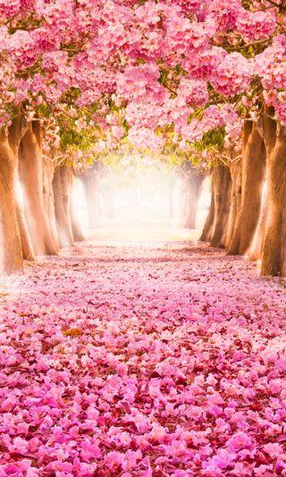 Обои на телефон цвести, лепестки, розовые, прекрасные, парк, деревья, trees blossom petals, pink park, beautiful pink park