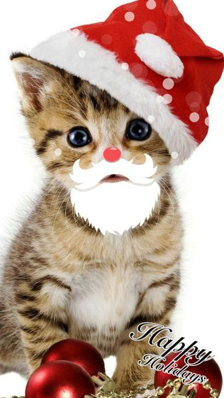 Обои на телефон каникулы, счастливые, санта, рождество, котята