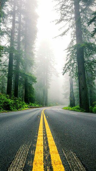 Обои на телефон туман, линии, желтые, дорога, дерево, природа