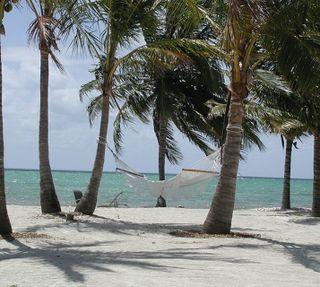 Обои на телефон флорида, пляж, пальмы, деревья, hammock