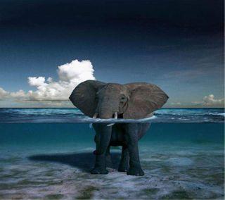 Обои на телефон слон, море