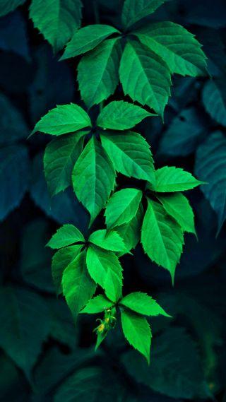 Обои на телефон природа, зеленые, листья, растения, макро, ветви