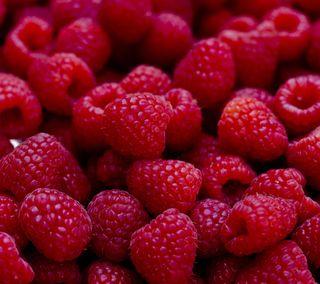 Обои на телефон свежие, фрукты, красые, raspberries