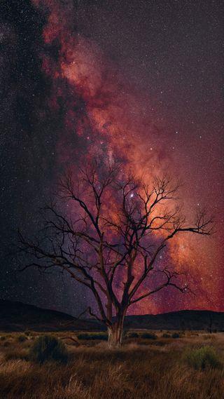 Обои на телефон дерево, фиолетовые, трава, природа, прекрасные, красые, космос, звезды, великолепные, gorgeous space