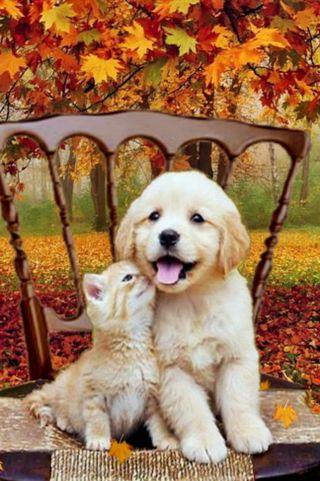 Обои на телефон собаки, лучшие, кошки, друзья
