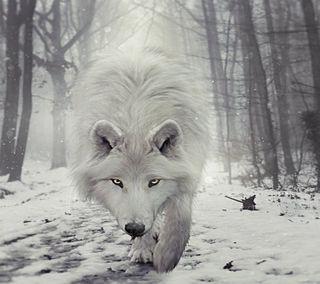 Обои на телефон зима, волк