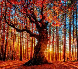 Обои на телефон солнечный свет, природа, осень, листья, дерево, восход, oak, foliage