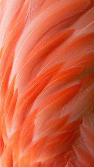 Обои на телефон перья, розовые, арт, art