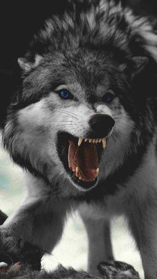 Обои на телефон безумные, злые, животные, волк