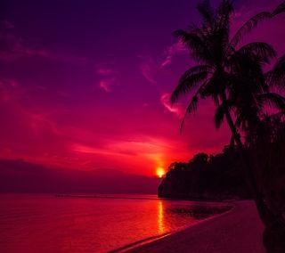 Обои на телефон закат, пляж, солнце, песок, пальмы, тень