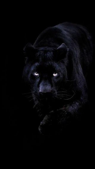 Обои на телефон пантера, черные, кошки, животные, big